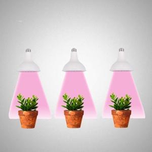 Augalų lempos